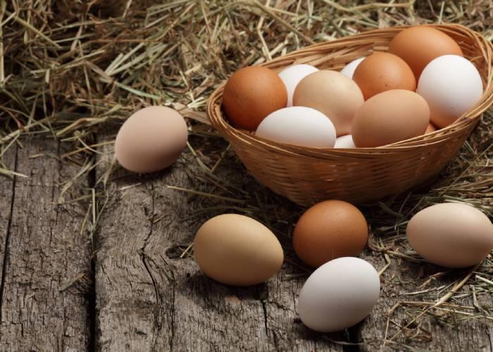 Les prestations de votre fournisseur d'œufs à Cappelle-Brouck