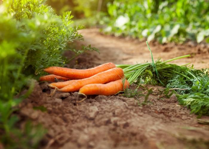 La vente de fruits et légumes en direct producteur à Cappelle-Brouck
